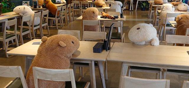 Japon : des peluches géantes dans un restaurant pour faire respecter la distanciation sociale