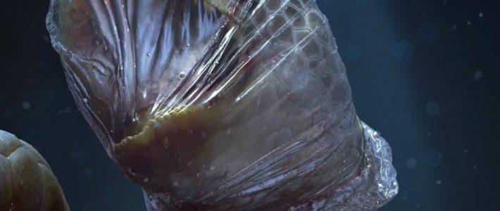 «Le plastique que vous utilisez une seule fois torture l'océan pour toujours.»…