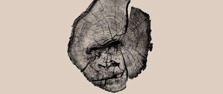 «Ce n'est pas qu'un arbre.»  Superbe campagne de sensibilisation contre la déf…