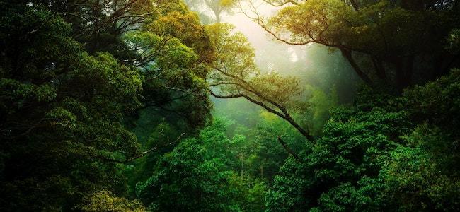 Nature & Dcouvertes, un engagement sans faille dans lco-conception…