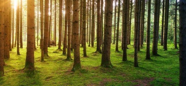 Marques engagées : arrêtez de planter des arbres !