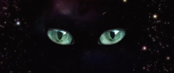 Sheba a trouvé la solution contre les chats qui réveillent leur maître en pleine nuit
