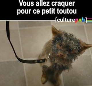 Impossible de ne pas être touché par la belle histoire de ce petit chien (qui …