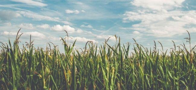 Pourquoi Kering investit dans l'agriculture régénérative
