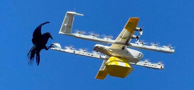 Google suspend la livraison par drone suite à des attaques de corbeaux