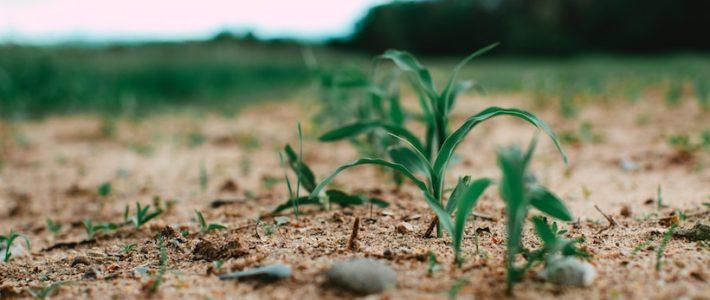 La Commission Européenne renoue avec le vieux fantasme des OGM